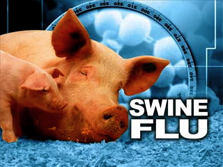swine flu copy