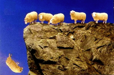 sheep_off_cliff-400x263