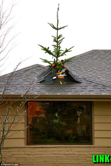 Christmas Decorations Tree Through Roof : Christmas tree bursting through roof not what it seems
